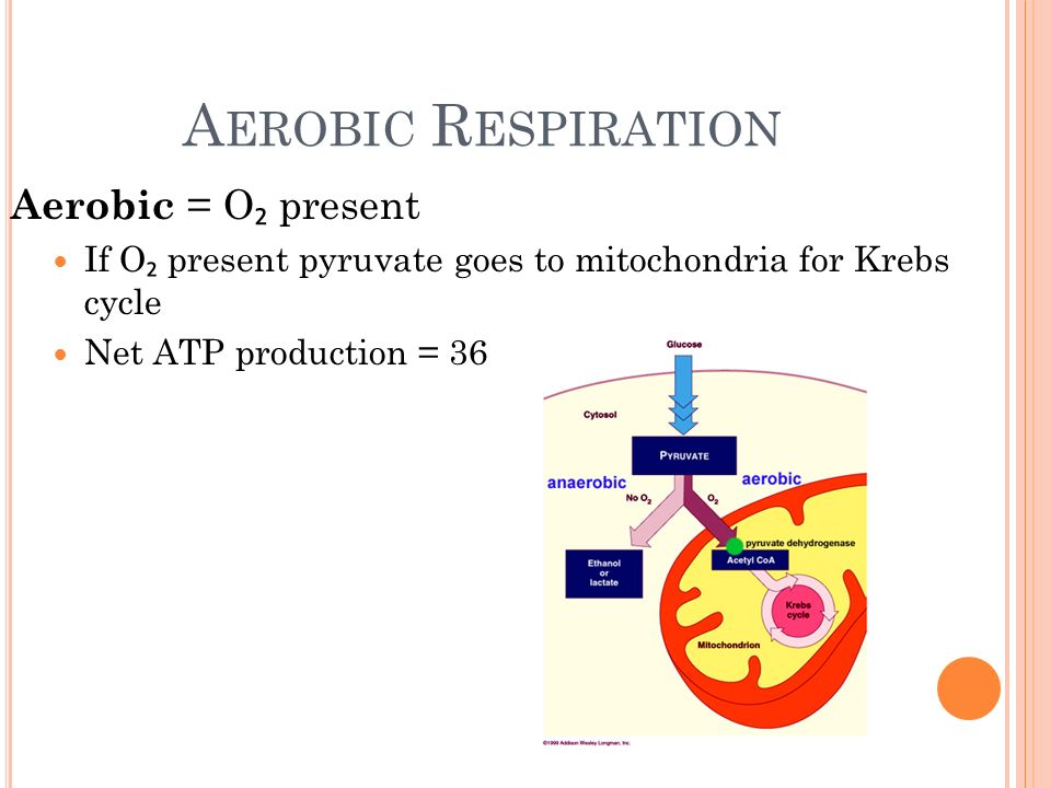 aerobic respiration Even though they both do not use oxygen and have similar parts to them, there are some differences between fermentation and anaerobic respiration learn more.