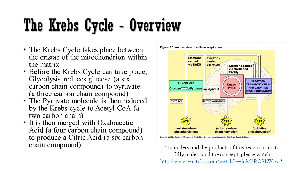 THE CELL (eukaryotic) The IB Biology Juniors. - ppt video online ...