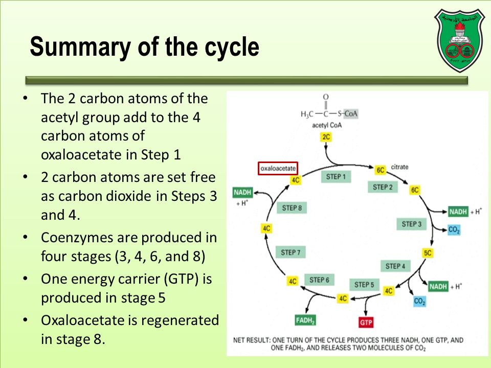 Carbon Cycle Essay Summary Cannornet Carbon Cycle Essay Summary Essay On Healthcare also Examples Of Thesis Essays  After High School Essay