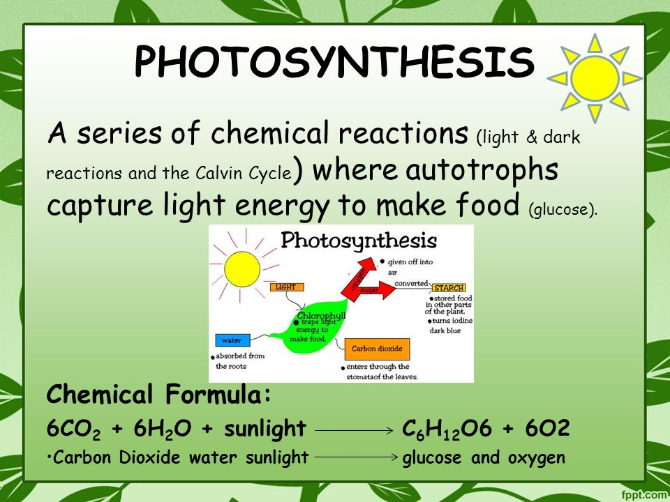 PHOTOSYNTHESIS & RESPIRATION - ppt video online download