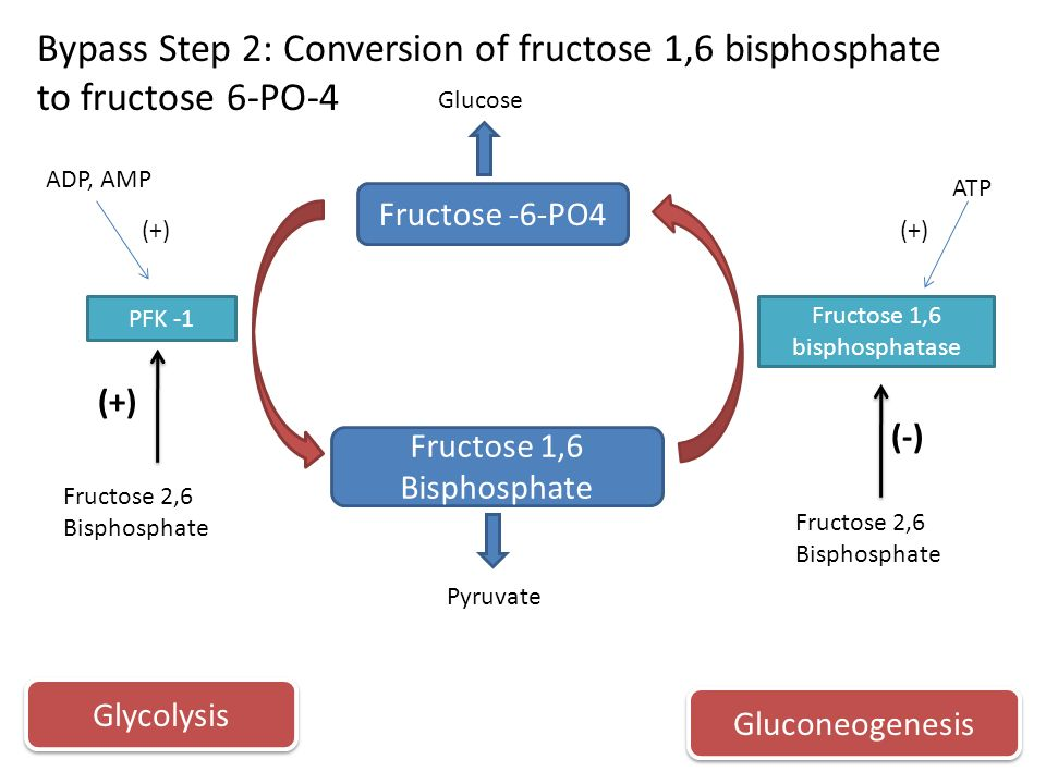 gluconeogenesis fructose 1 6 bisphosphatase deficiency Pyruvate kinase deficiency in erythrocytes causes chronic hemolytic anemia due  to  fructose-1,6-bisphosphate (feed-forward stimulation.