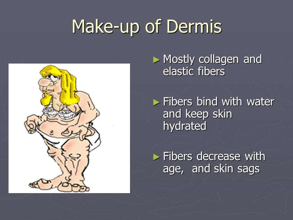 Make-up of Dermis Mostly collagen and elastic fibers
