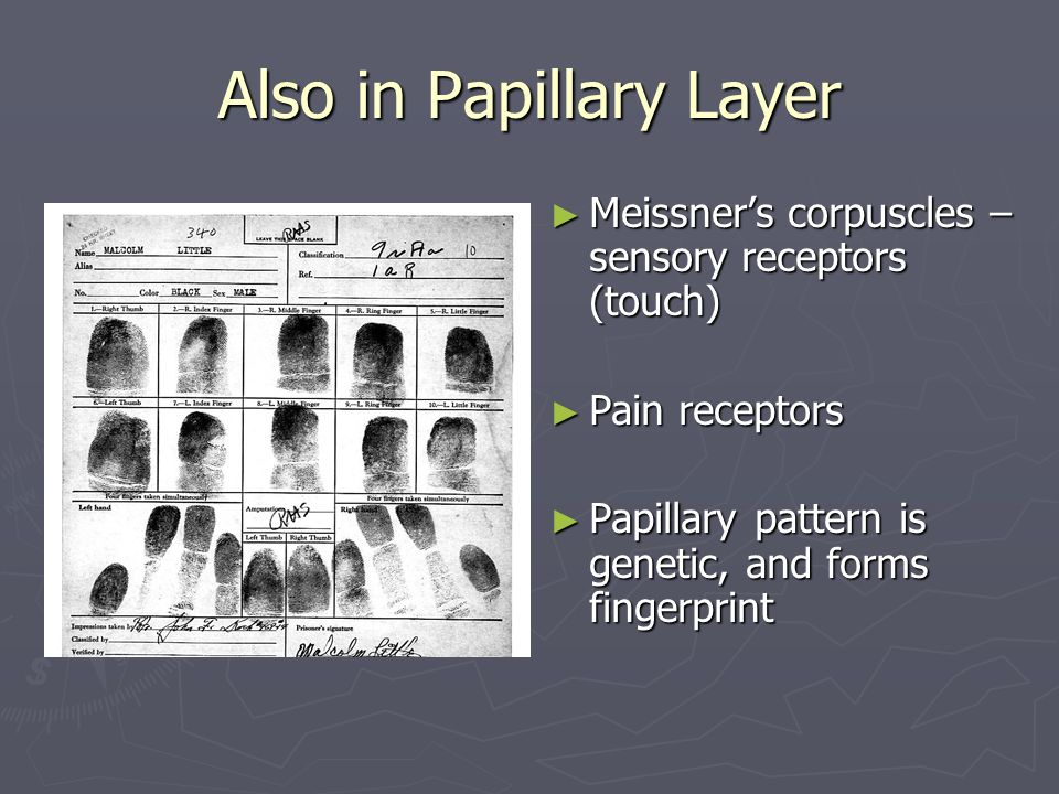Also in Papillary Layer