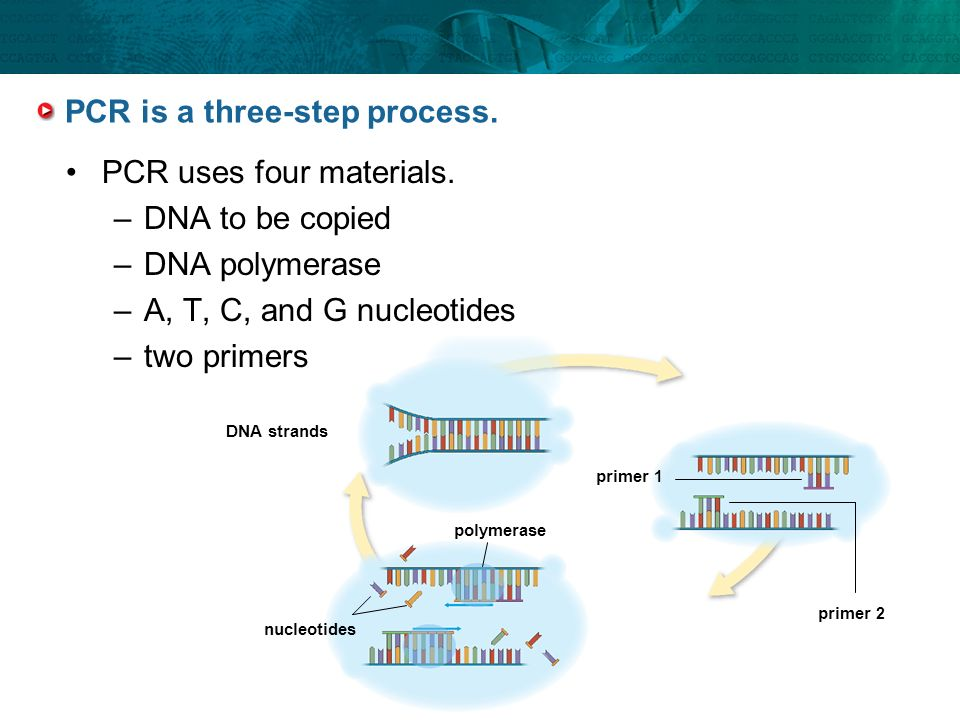 PCR is a three-step process.