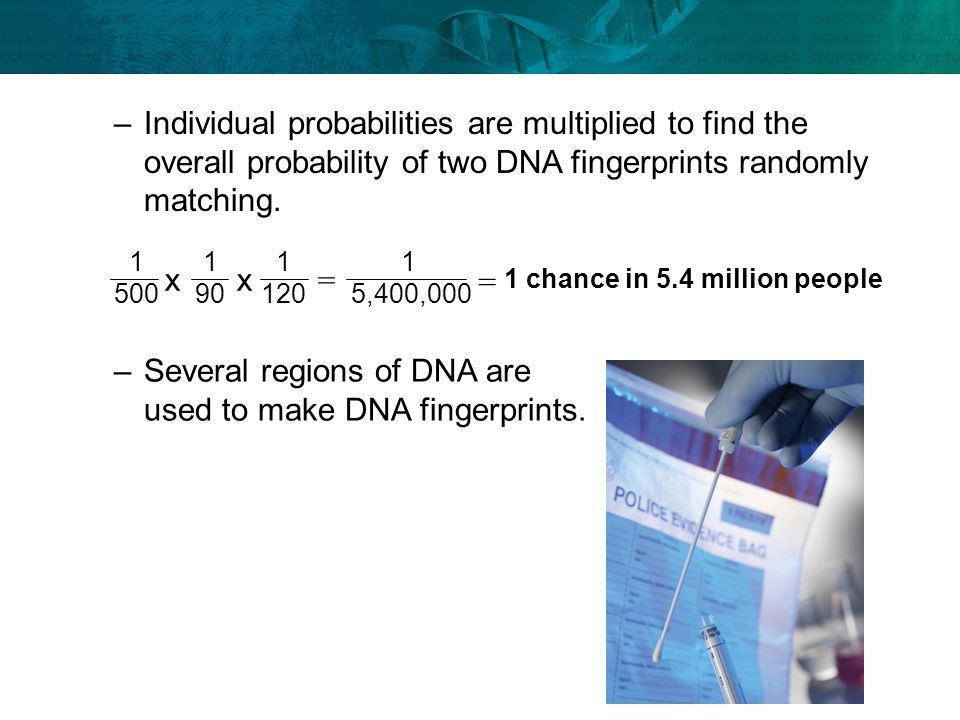 Several regions of DNA are used to make DNA fingerprints.