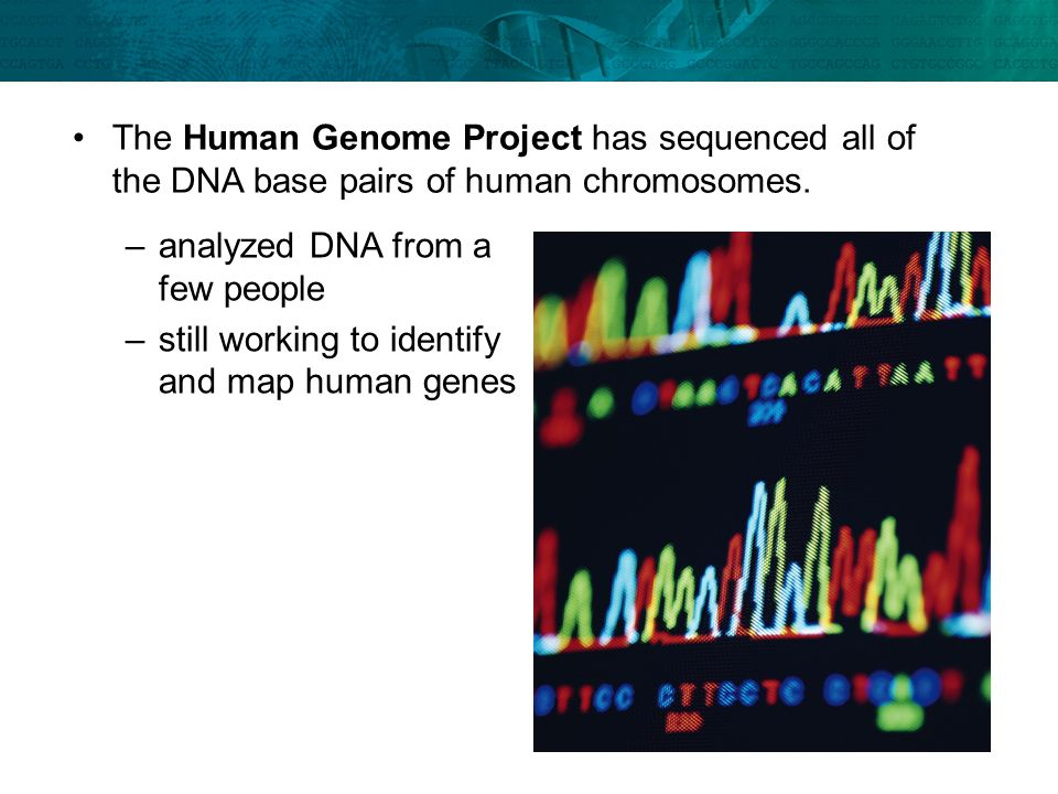 analyzed DNA from a few people