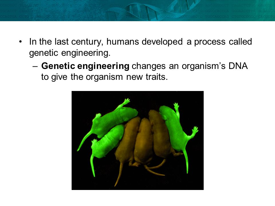 In the last century, humans developed a process called genetic engineering.