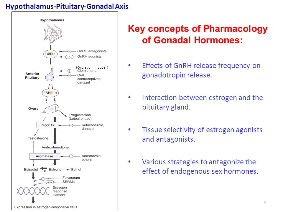 gonadal sex hormones Gonadal sex hormones sex steroids, also known as gonadocorticoids gonadal sex hormones and gonadal steroids, are steroid hormones that interact bust measurements female sex hormones and their functions for bra size with vertebrate androgen or estrogen receptors.