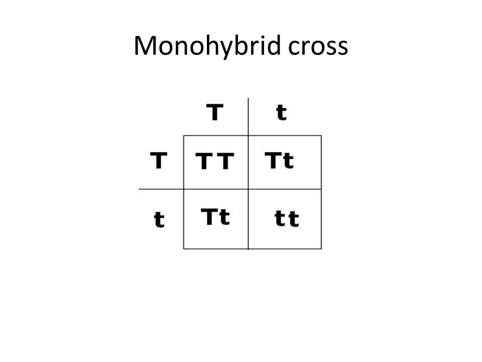 Monohybrid cross A breeding experiment between P generation – Monohybrid Cross Worksheet