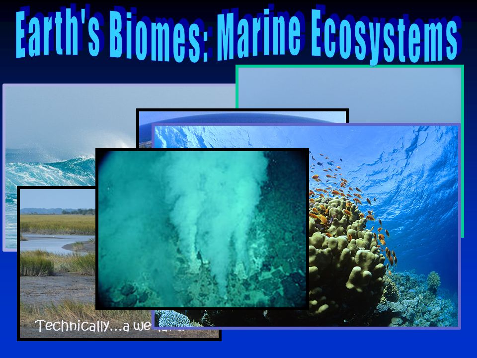 Earth s Biomes: Marine Ecosystems