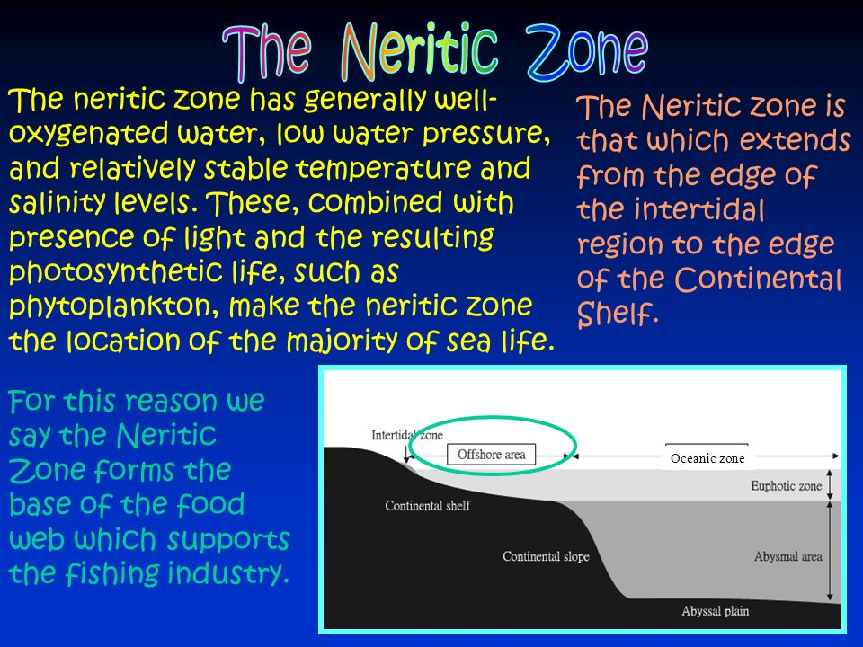 The Neritic Zone