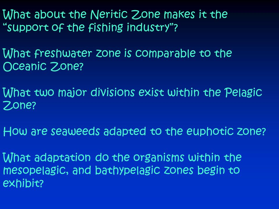 What about the Neritic Zone makes it the support of the fishing industry