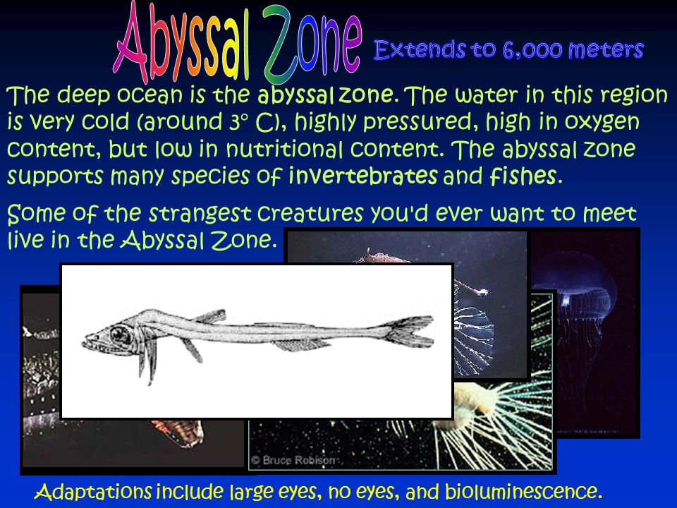 Abyssal Zone Extends to 6,000 meters