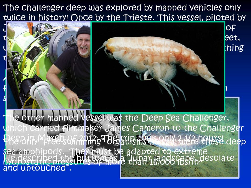 The challenger deep was explored by manned vehicles only twice in history! Once by the Trieste. This vessel, piloted by Jacques Piccard and Don Walsh, reached the bottom of the trench on January 23, At a depth of 35,814 feet, which took the men nearly 5 hours to reach, the first thing they saw was a fish!