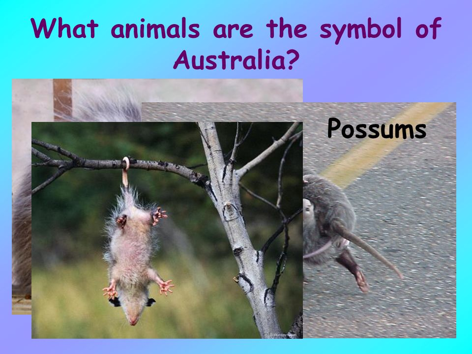 What Do You Know About Australia Ppt Download