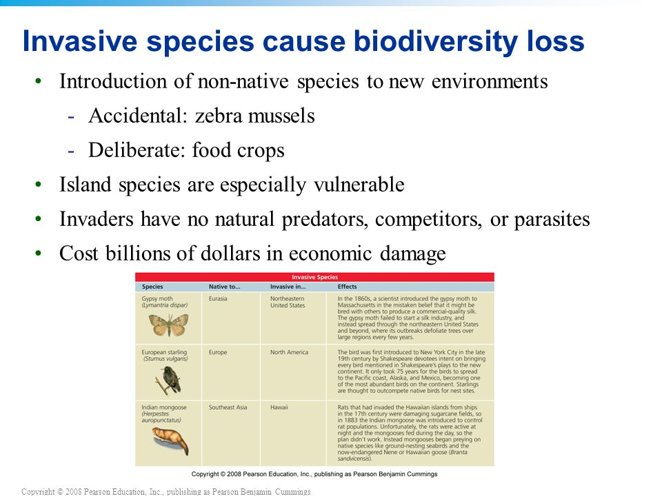 loss of species Species across land, rivers and seas decimated as humans kill for food in unsustainable numbers and destroy habitats.