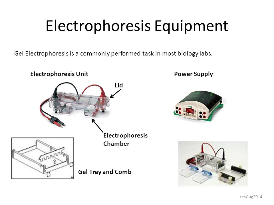 commonly used equipment in the science laboratory ppt