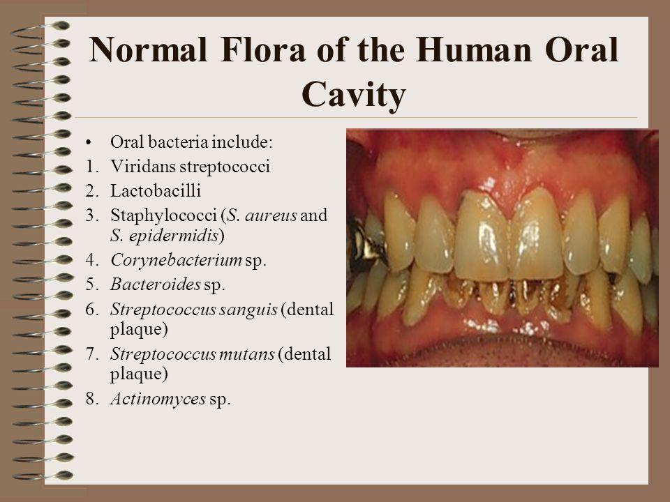 Enter Oral flora bacteria