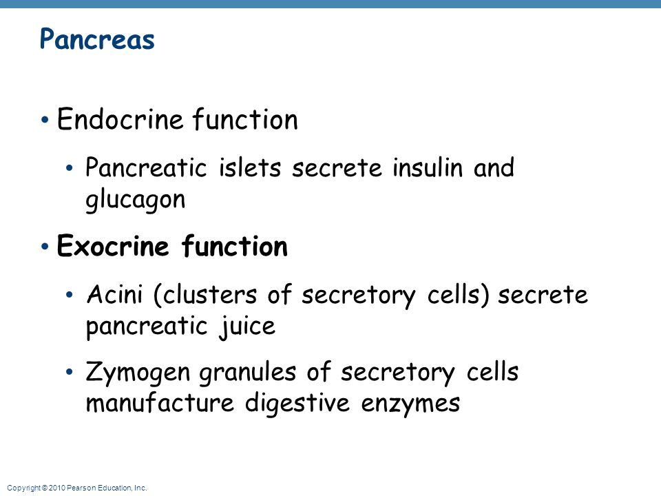 pancreas location behind the stomach - ppt video online download, Human Body