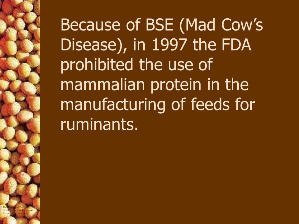 Because of BSE (Mad Cow's Disease), in 1997 the FDA prohibited the use of mammalian protein in the manufacturing of feeds for ruminants.