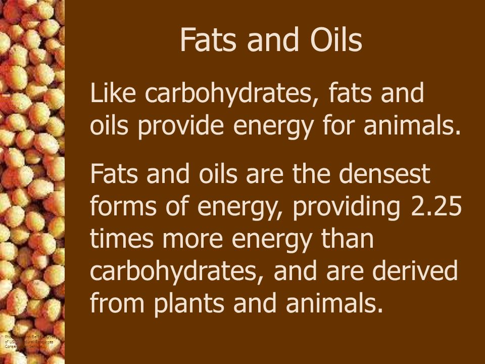 Fats and Oils Like carbohydrates, fats and oils provide energy for animals.