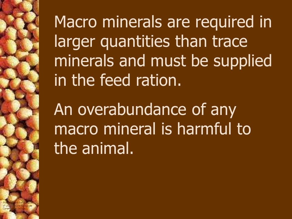 Macro minerals are required in larger quantities than trace minerals and must be supplied in the feed ration.