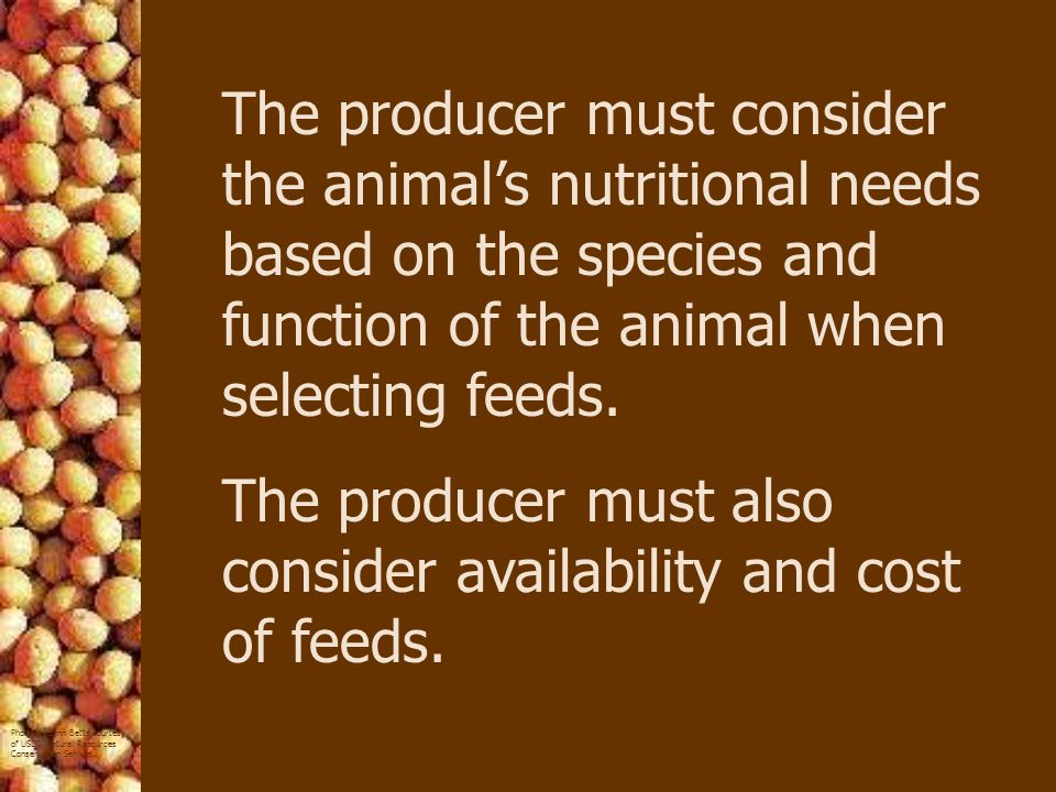 The producer must consider the animal's nutritional needs based on the species and function of the animal when selecting feeds.