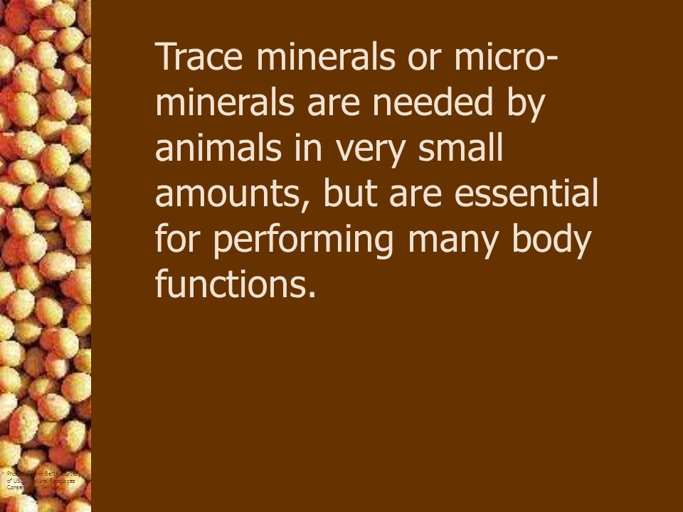 Trace minerals or micro-minerals are needed by animals in very small amounts, but are essential for performing many body functions.