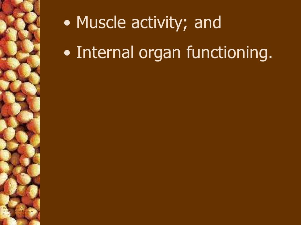 Muscle activity; and Internal organ functioning.