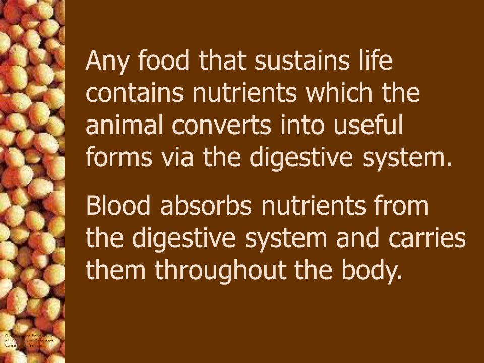 Any food that sustains life contains nutrients which the animal converts into useful forms via the digestive system.