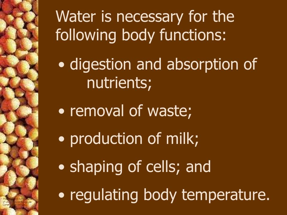 Water is necessary for the following body functions: