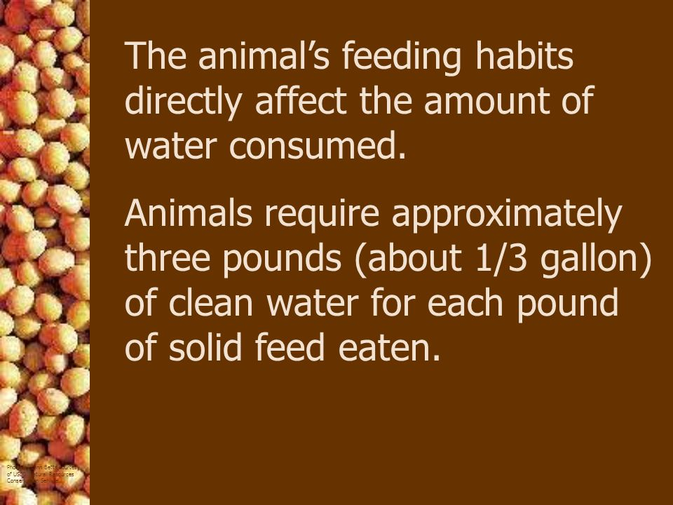 The animal's feeding habits directly affect the amount of water consumed.