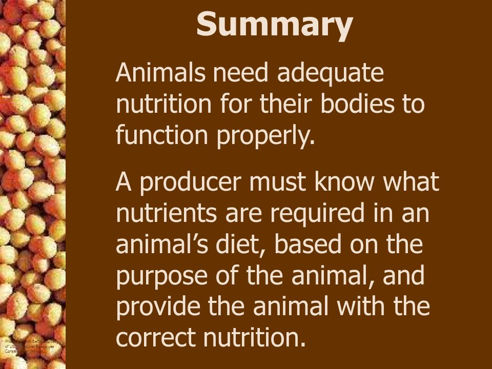 Summary Animals need adequate nutrition for their bodies to function properly.
