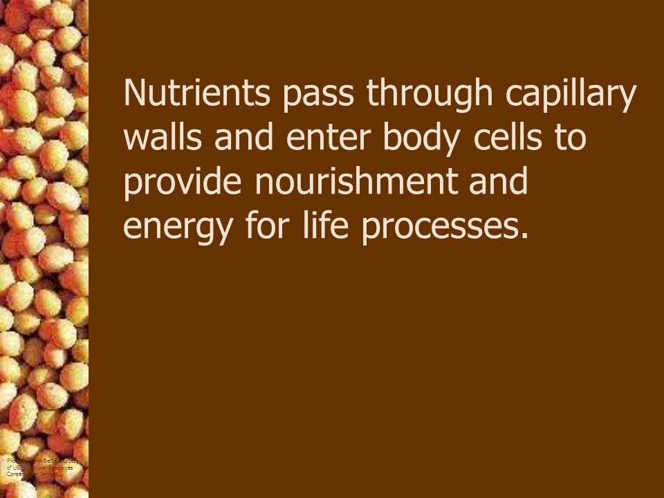 Nutrients pass through capillary walls and enter body cells to provide nourishment and energy for life processes.