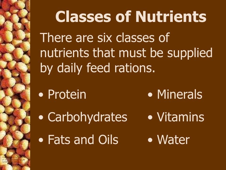 Classes of Nutrients There are six classes of nutrients that must be supplied by daily feed rations.