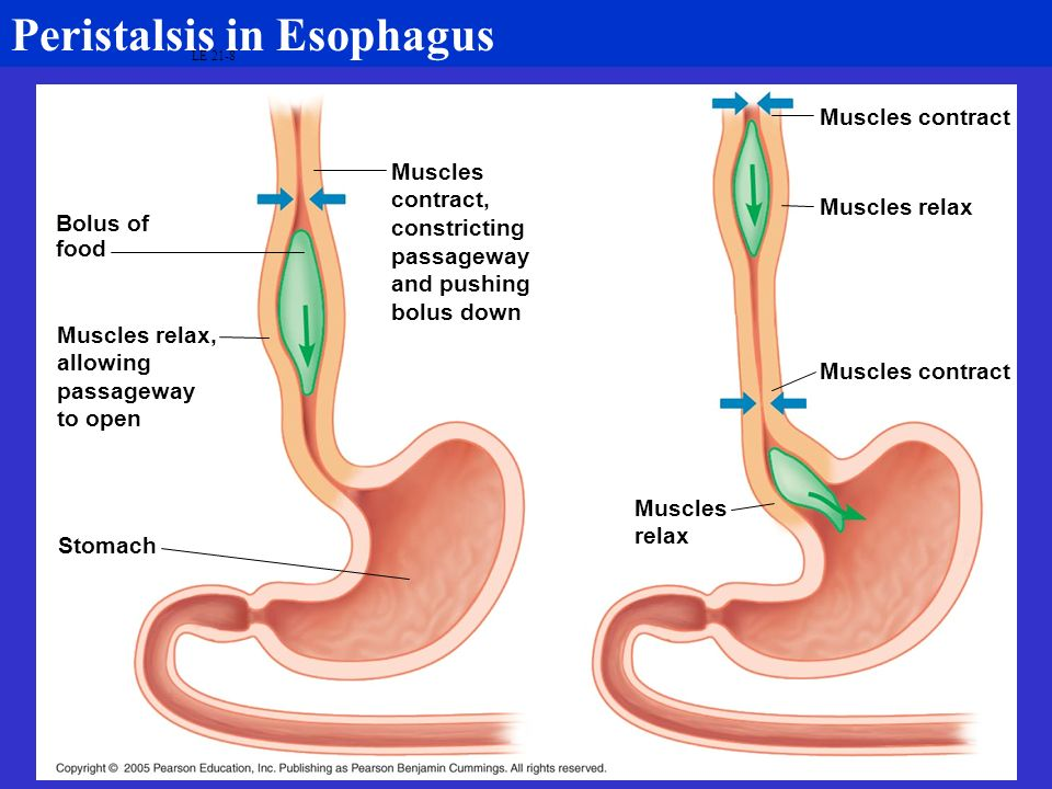 Peristalsis in Esophagus