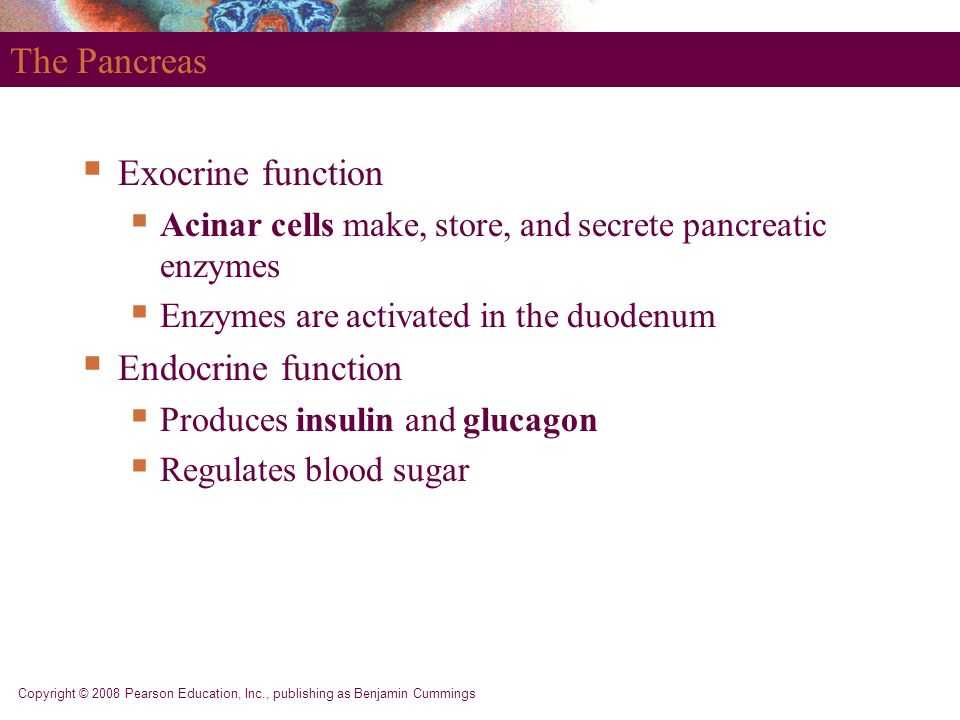 The Pancreas Exocrine function Endocrine function
