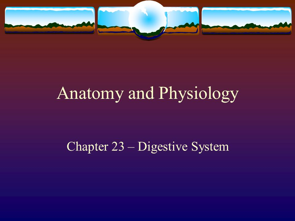 digestive system anatomy and physiology pdf