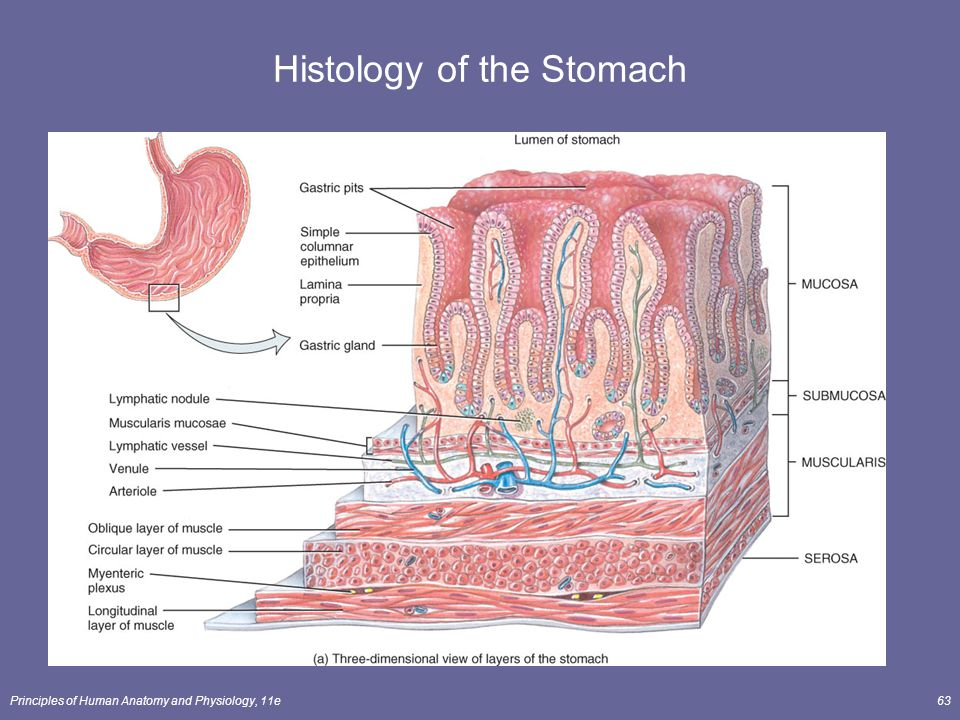 Human anatomy histology