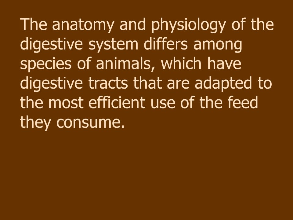 THE DIGESTIVE SYSTEM AgriScience 332 Animal Science #8646-E - ppt ...