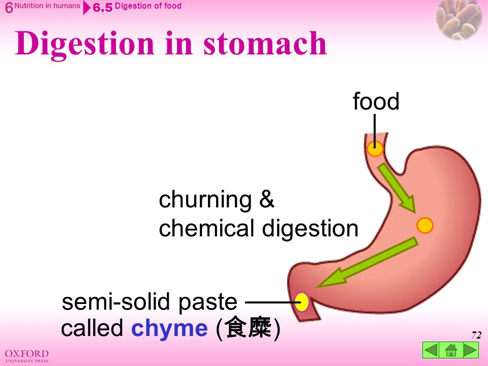 think about… 6.1 the process of human nutrition 6.2 the human, Cephalic Vein