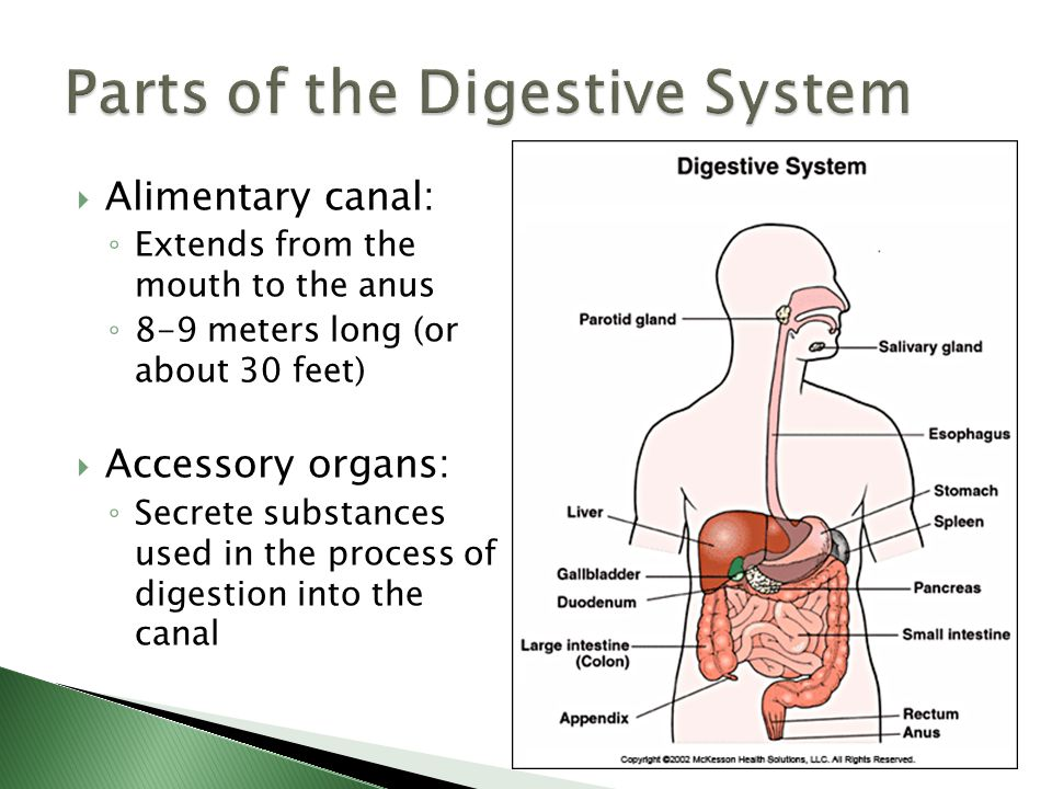 The Digestive System Biology ppt download