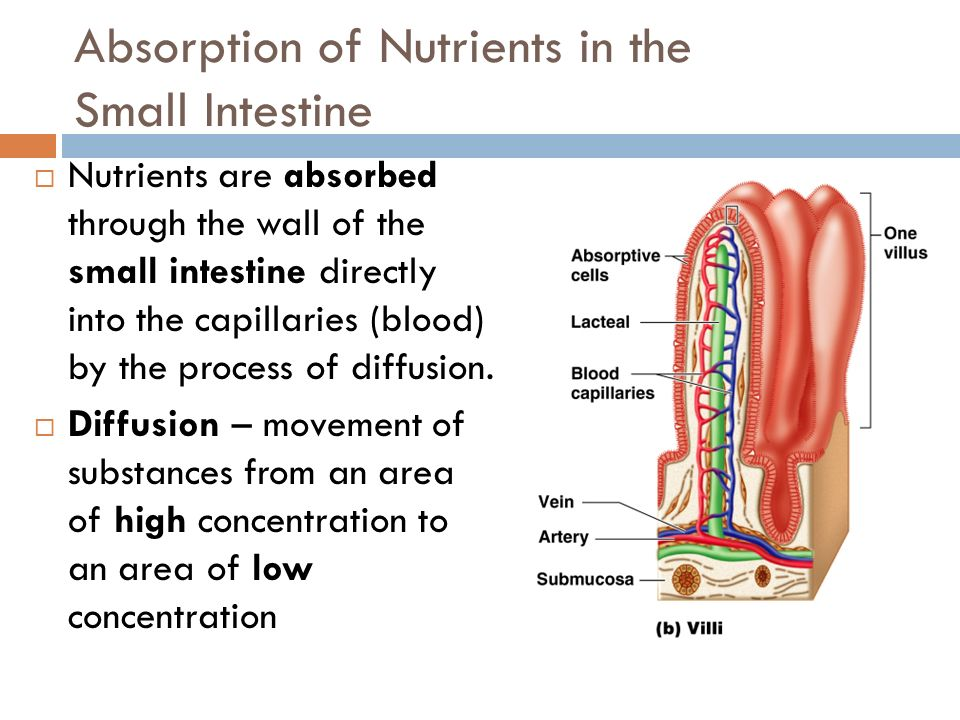 Absorption of Nutrients in the Small Intestine