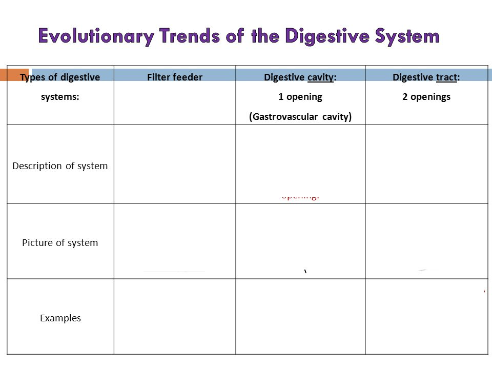 Evolutionary Trends of the Digestive System