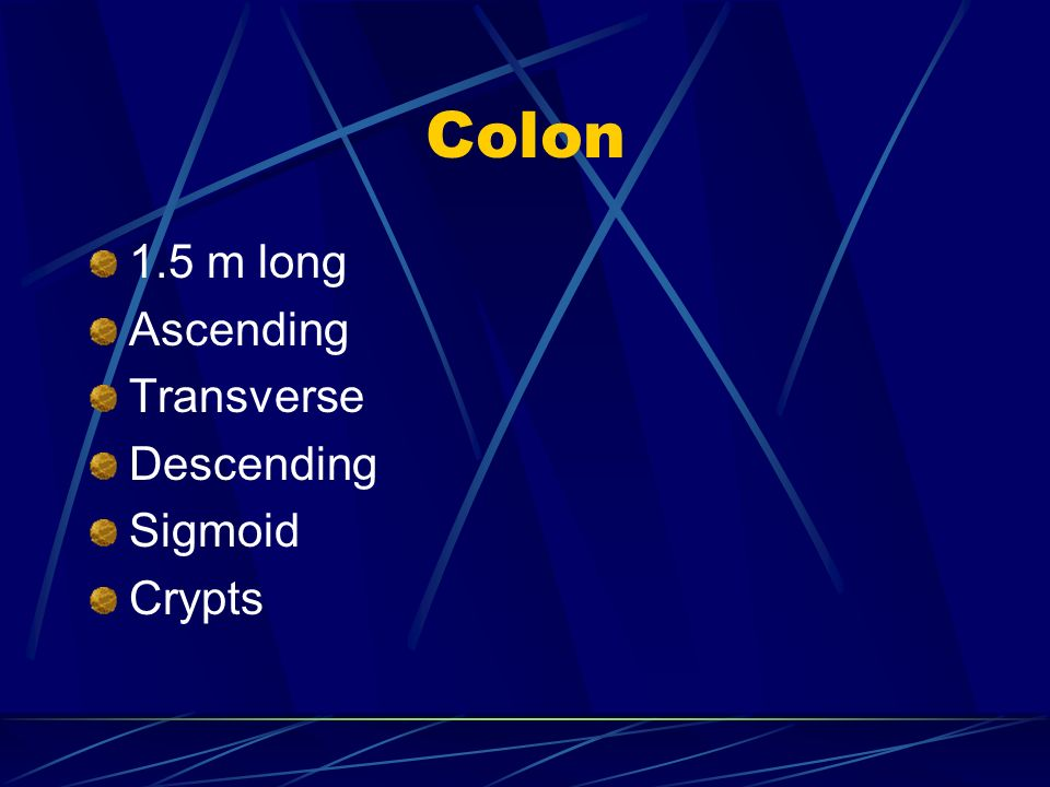 Colon 1.5 m long Ascending Transverse Descending Sigmoid Crypts