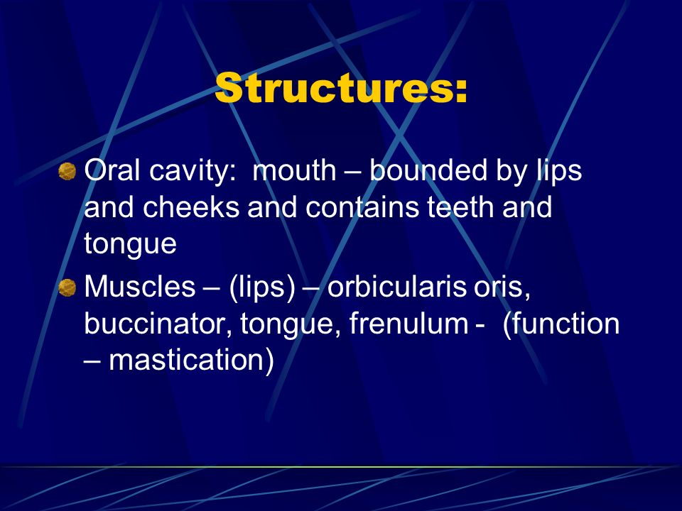 Structures: Oral cavity: mouth – bounded by lips and cheeks and contains teeth and tongue.