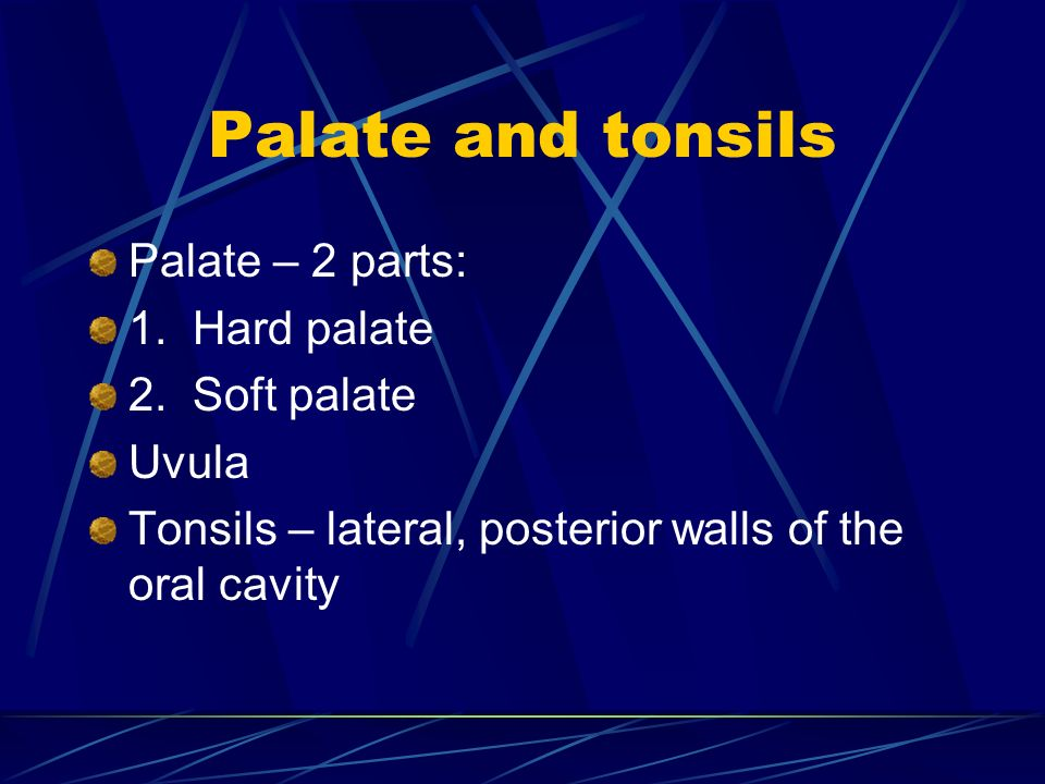 Palate and tonsils Palate – 2 parts: 1. Hard palate 2. Soft palate