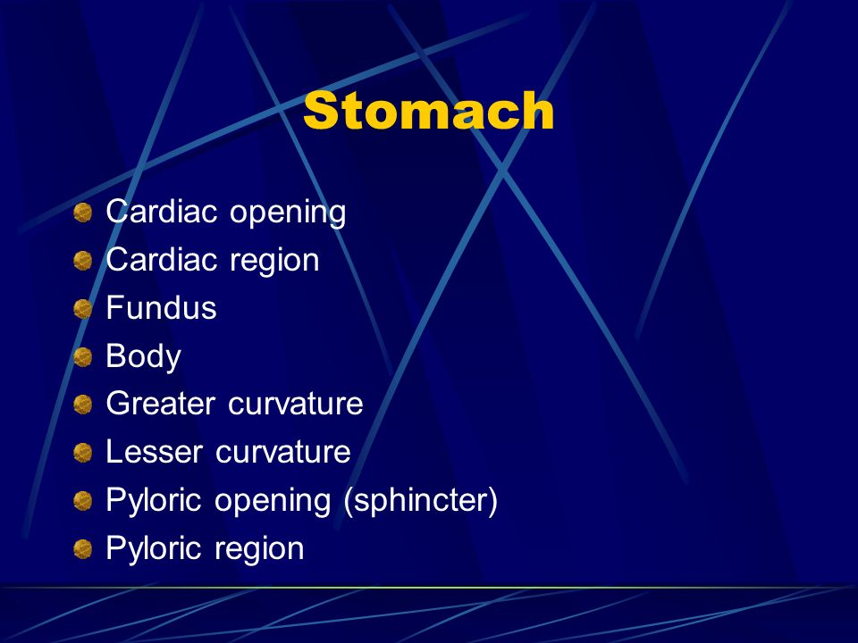 Stomach Cardiac opening Cardiac region Fundus Body Greater curvature