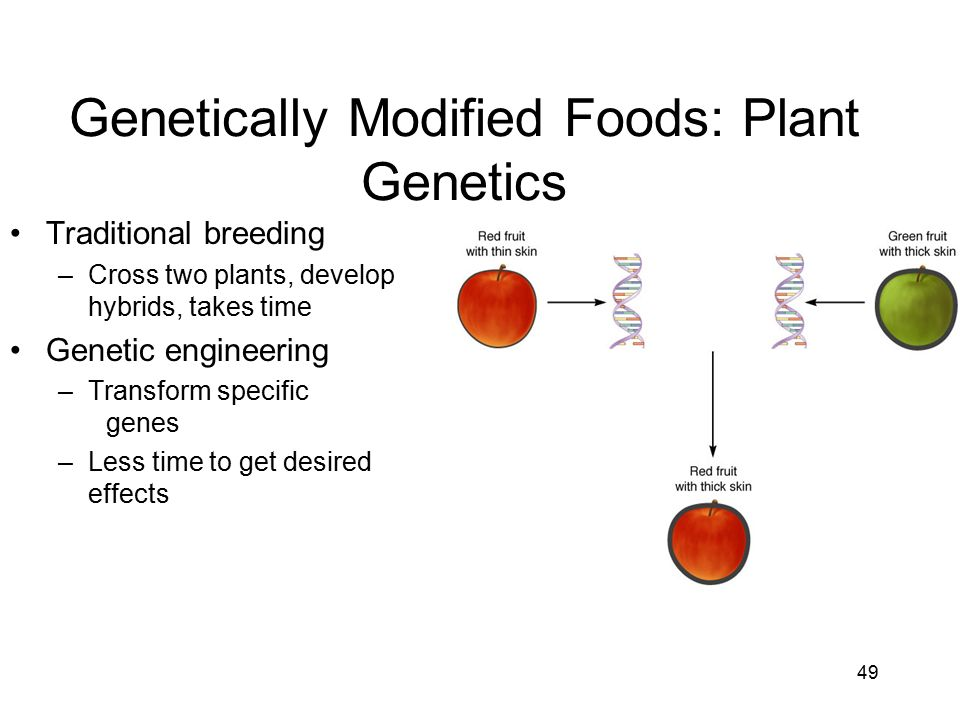 genetics modified foods Read our article and learn more on medlineplus: genetically engineered foods.