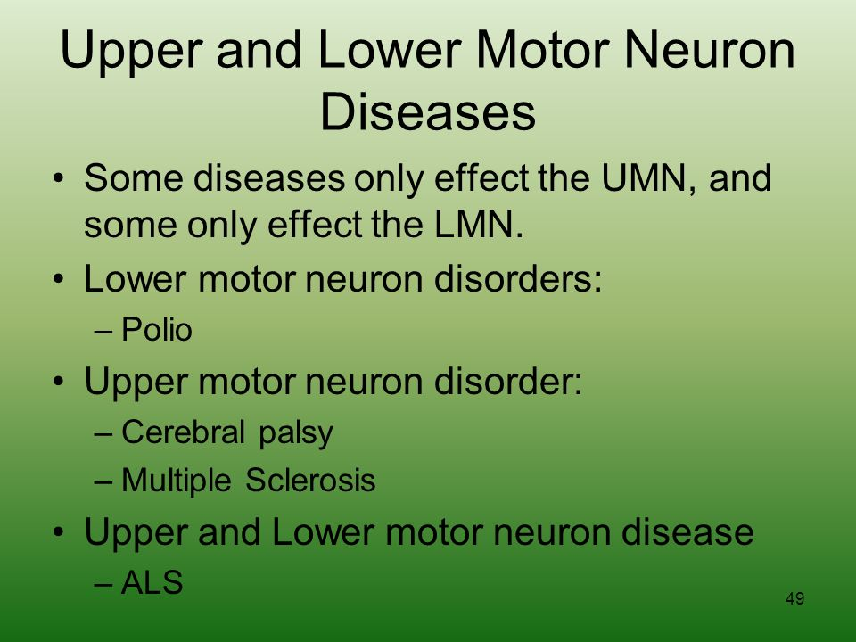 Cranial nerves and spinal cord ppt download What is lower motor neuron disease